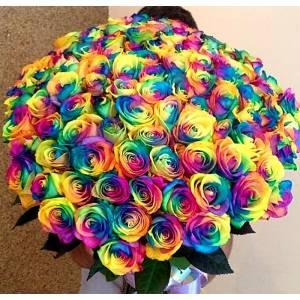 Крупные 101 радужная роза с лентой R813